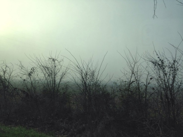 Olivia_ photography_ fog 3