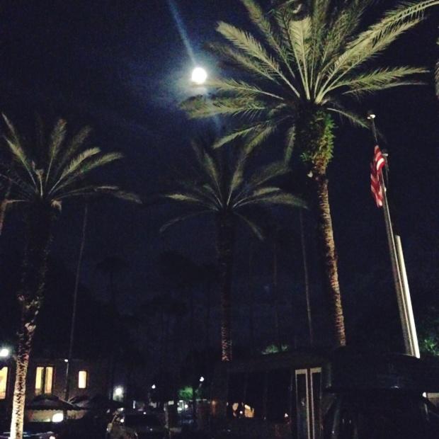 the florida i love_ winter moon _2