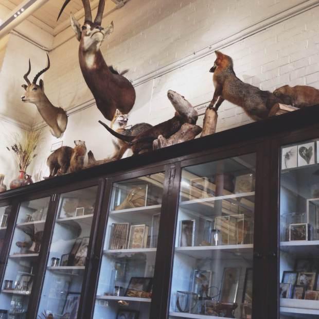 risd nature lab