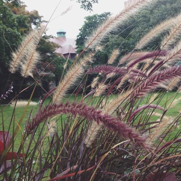 brown green_ pvd_WM