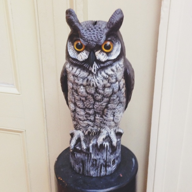 owls 3