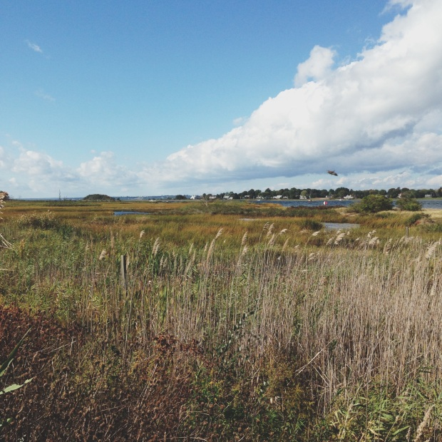 ri salt marsh 2
