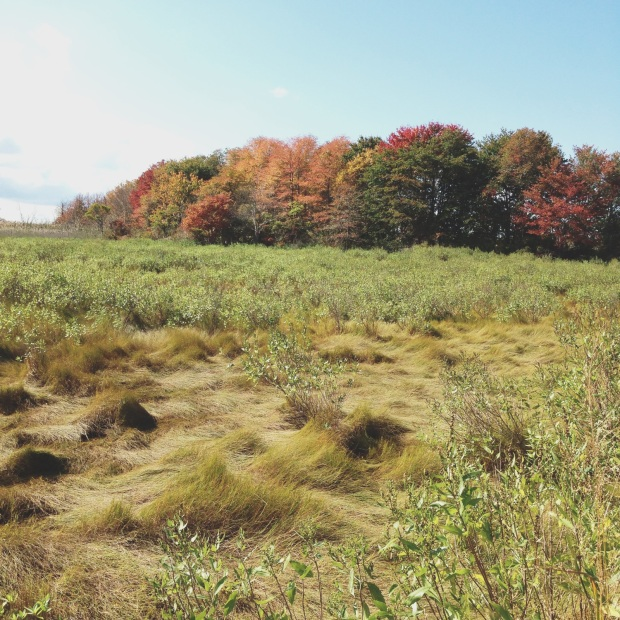 ri salt marsh 3