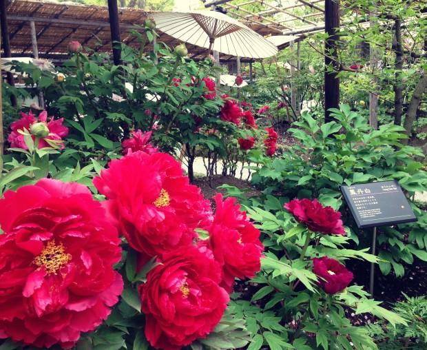 Flower Garden_11