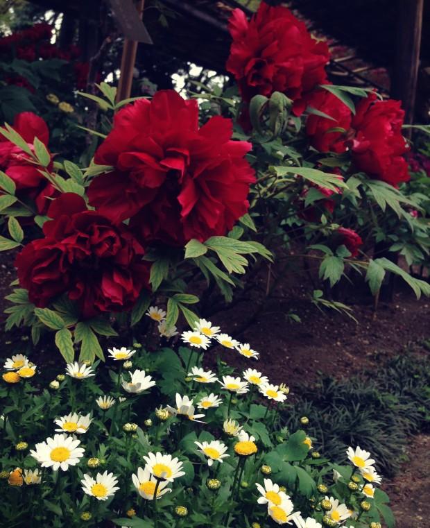 Flower Garden_15