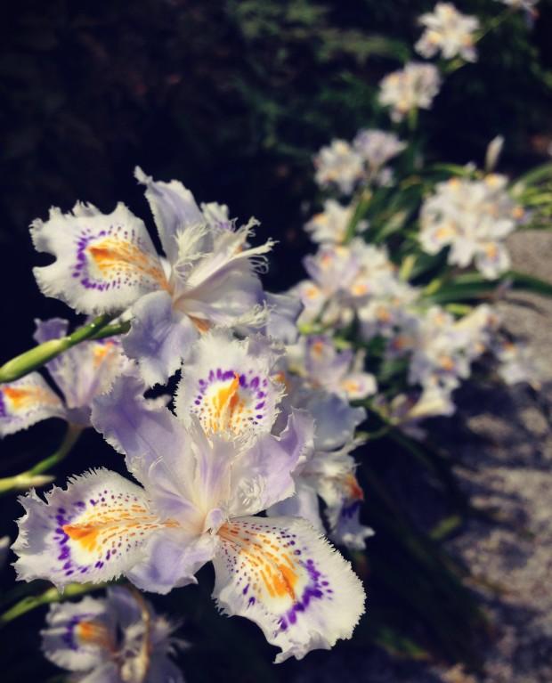 Flower Garden_17