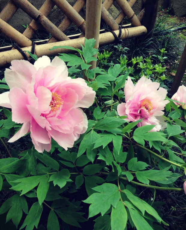 Flower Garden_7