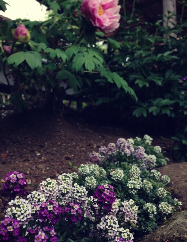 Flower Garden_9