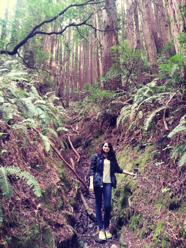 Muir Woods _ 1
