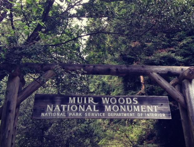 Muir Woods _ 4