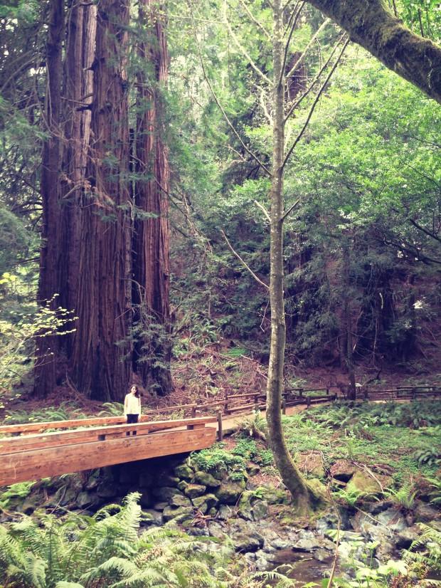 Muir Woods _ 5