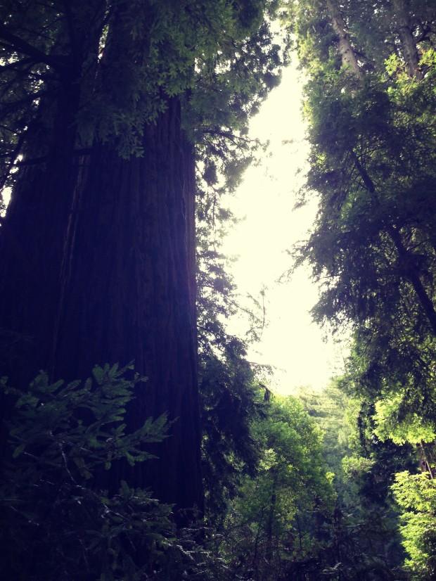 Muir Woods _ 6