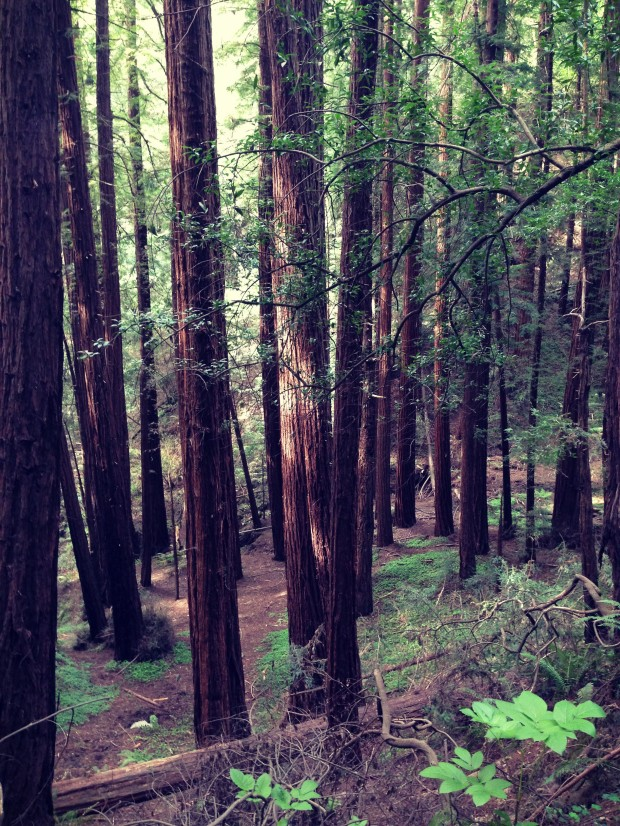 Muir Woods _ 8