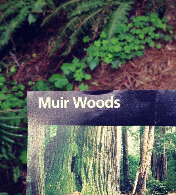 Muir Woods _ 9
